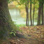 Prześliczny oraz {schludny zieleniec to nie lada wyzwanie, przede wszystkim jak jego pielęgnacją zajmujemy się sami.